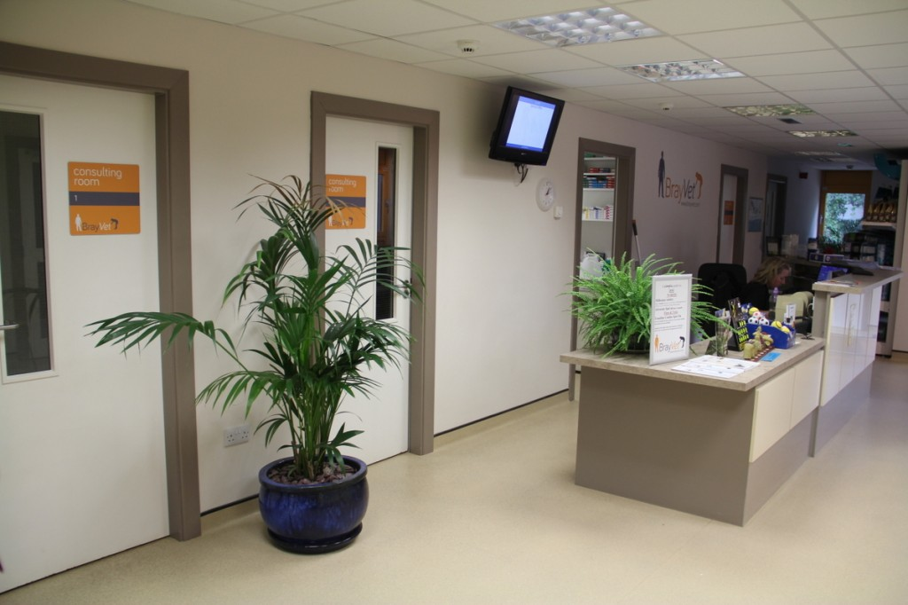 BrayVet has five large consulting rooms leading off our waiting room
