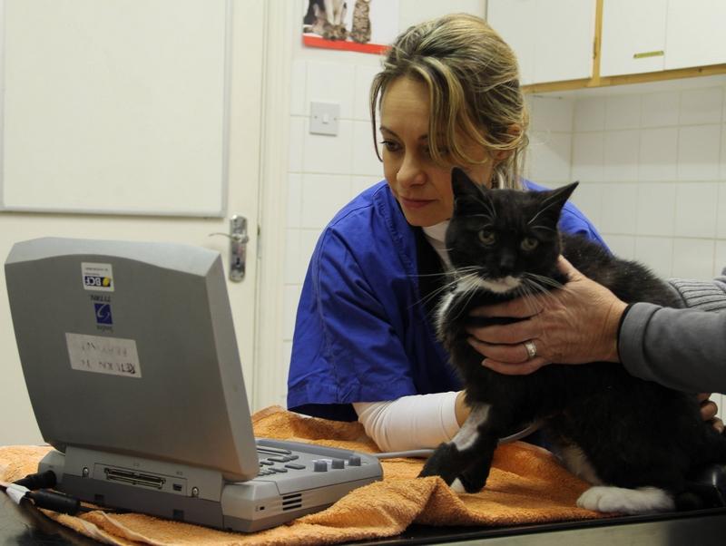 veterinary staff
