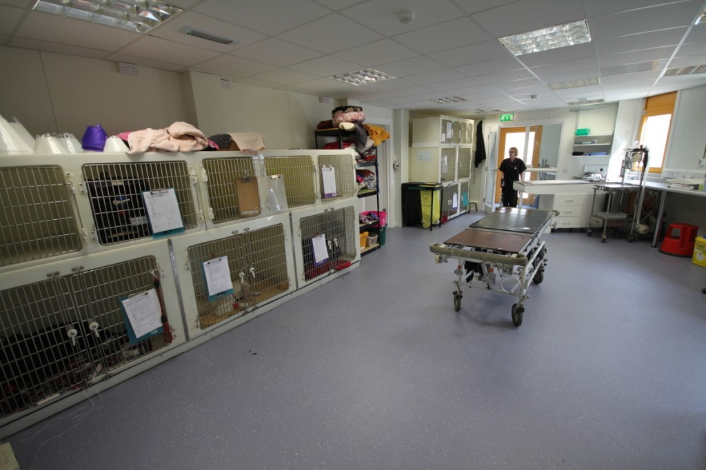 Our new hospital kennel area provides comfortable accommodation for pets when ill or recovering from operations