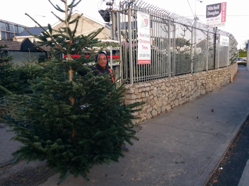 Christmas City Vet.Brayvet Local Business Profile Christmas Trees For Sale At