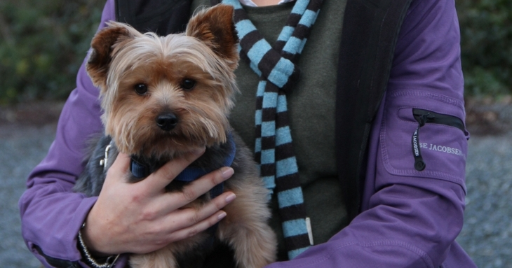 Scruff is a 4 year old Yorkshire Terrier who had dandruff