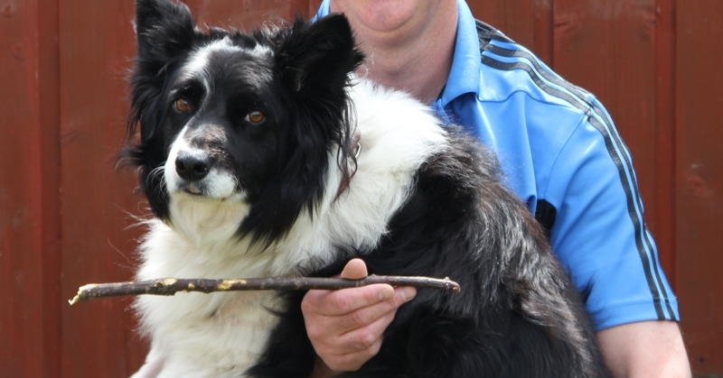 Sammy an 8 year old Collie who nearly died