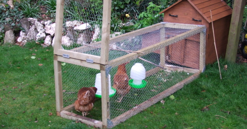 Four hens – Ruby, Ginger, Snowy and Penny