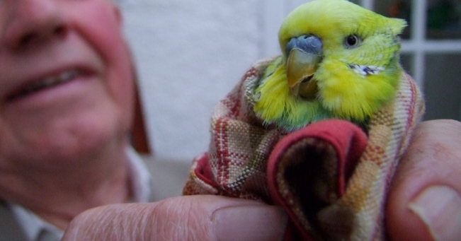 A budgie called Jimmy