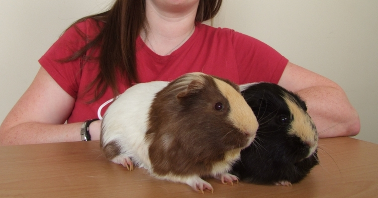 Coffee Slice and Nelson are one year old Guinea Pigs