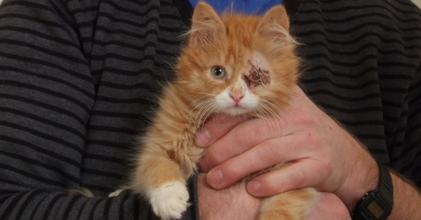 Edward the kitten had a damaged eye