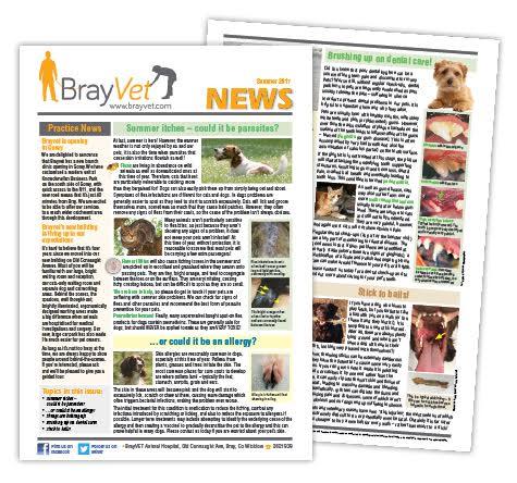 Brayvet's summer newsletter