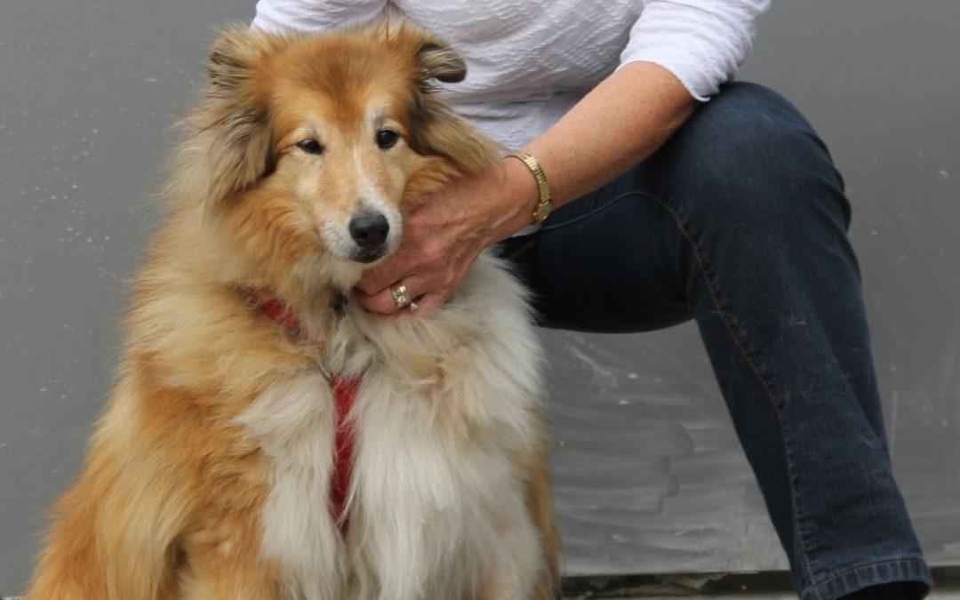 Penny the Shetland Sheepdog had foul smelling breath