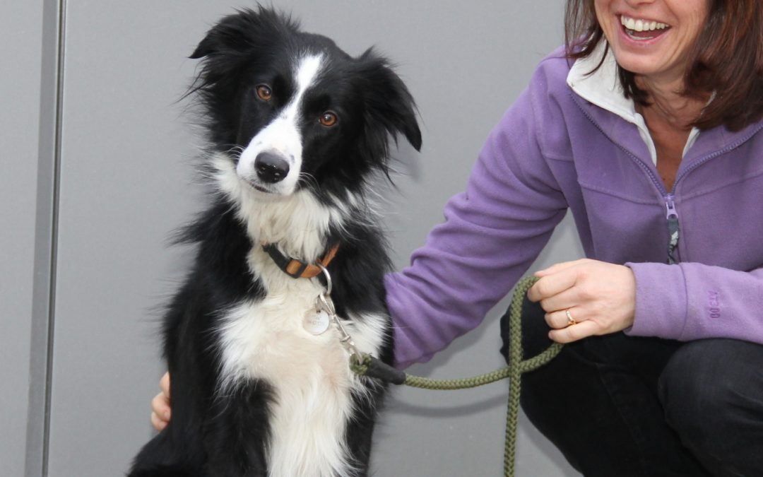 Tess the Border Collie became lame in her back leg