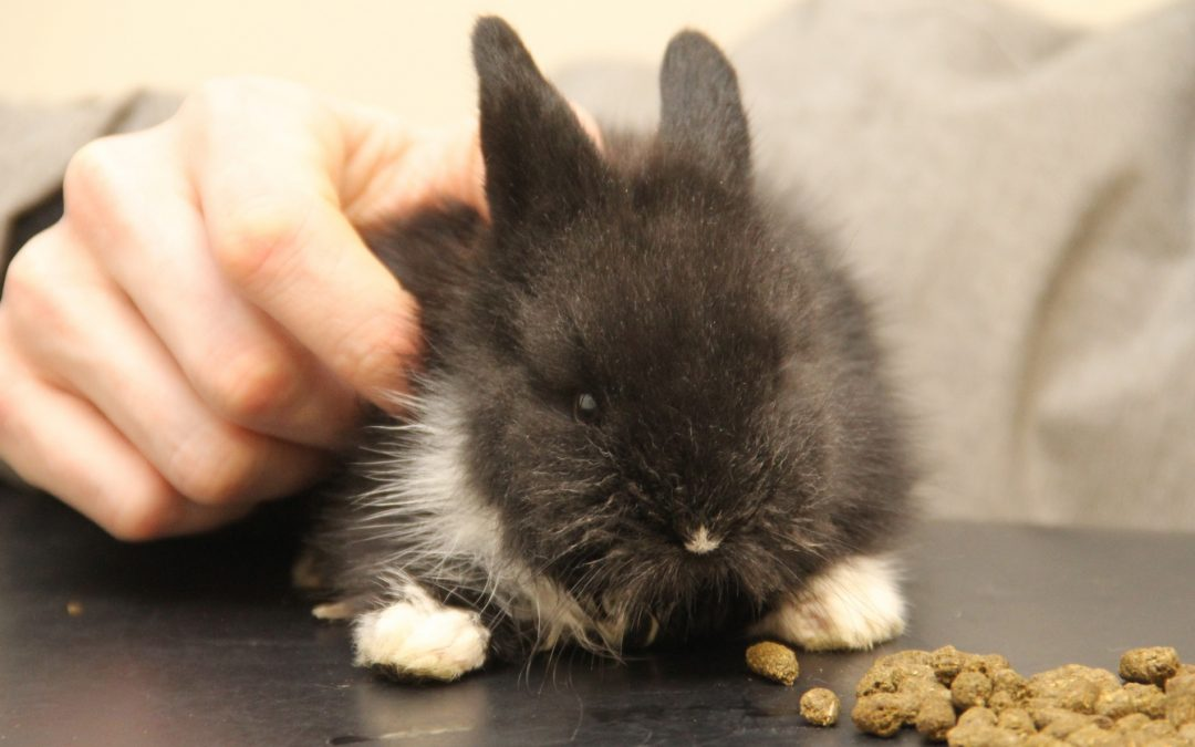 Socks the rabbit had stopped eating