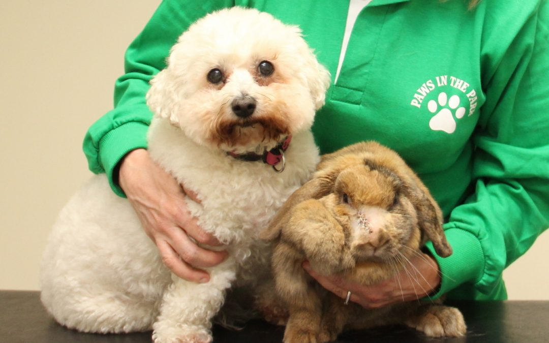 TJ the rabbit and Molly the dog