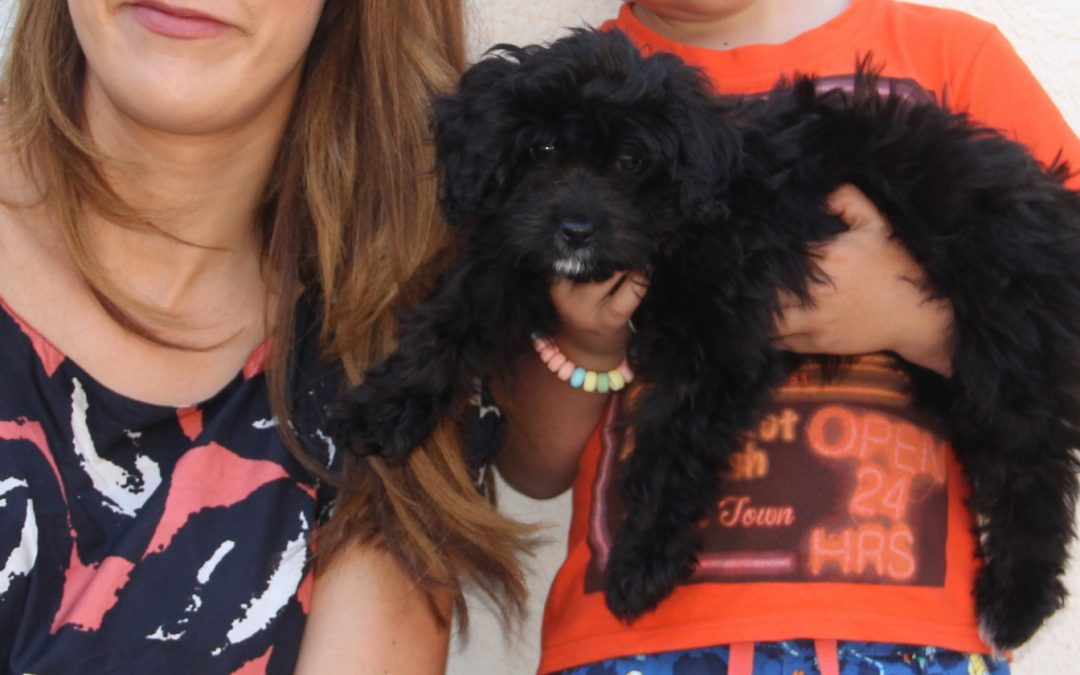 Kiko is a 12 week old crossbred puppy