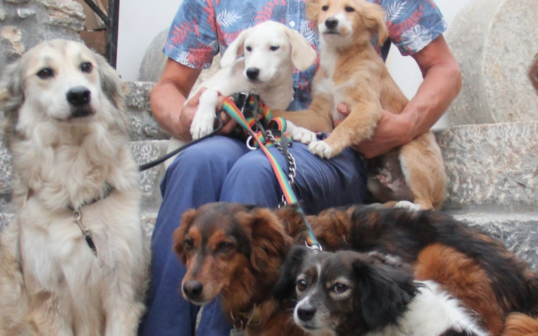Five dogs and four cats in Greece
