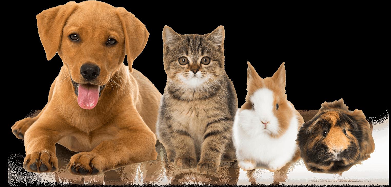BrayVet Pets